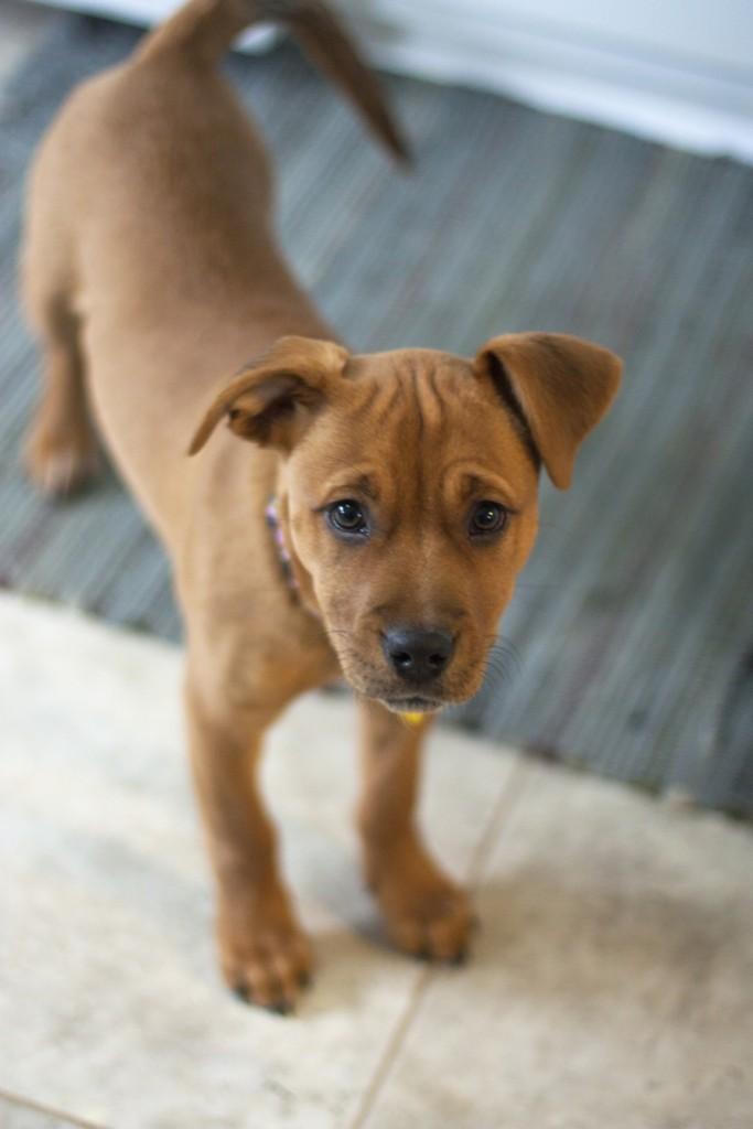 Freya Puppy