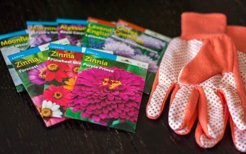 flower-seed-packets-and-gardening gloves