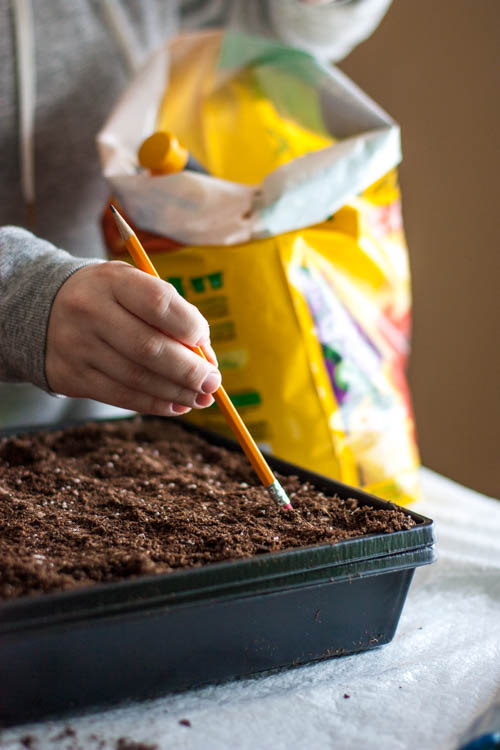 making-holes-for-vegetable-seeds