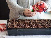 A Beginner's Guide To Planning A Garden &  A Free Garden Planner
