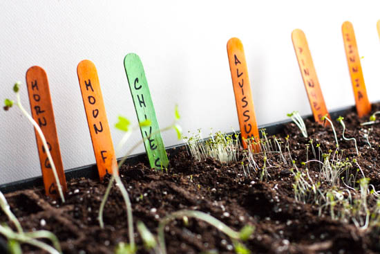 starting-seeds-and-planning-a-garden_high_res-21