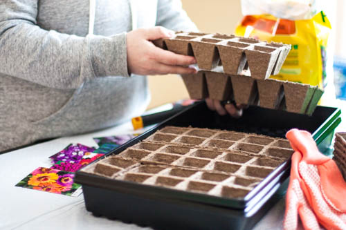 starting-seeds-indoors-in-trays