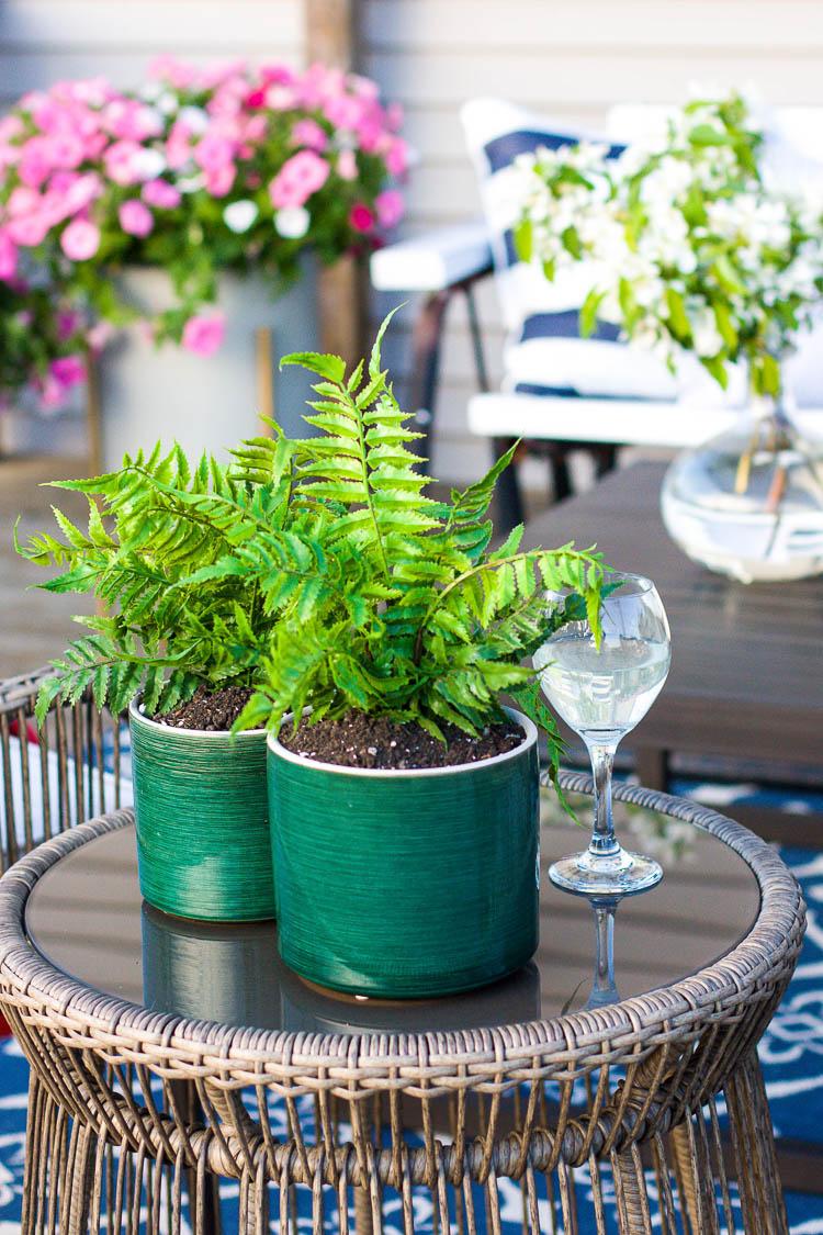 green-ferns-in-green-pots