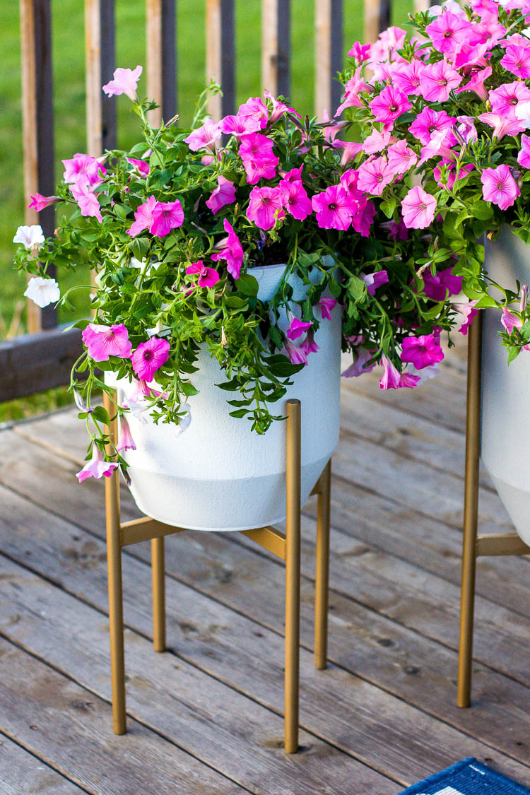 concrete-flower-planters-with-pink-petunias