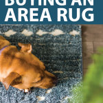 brown-dog-sleeping-on-navy-blue-area-rug