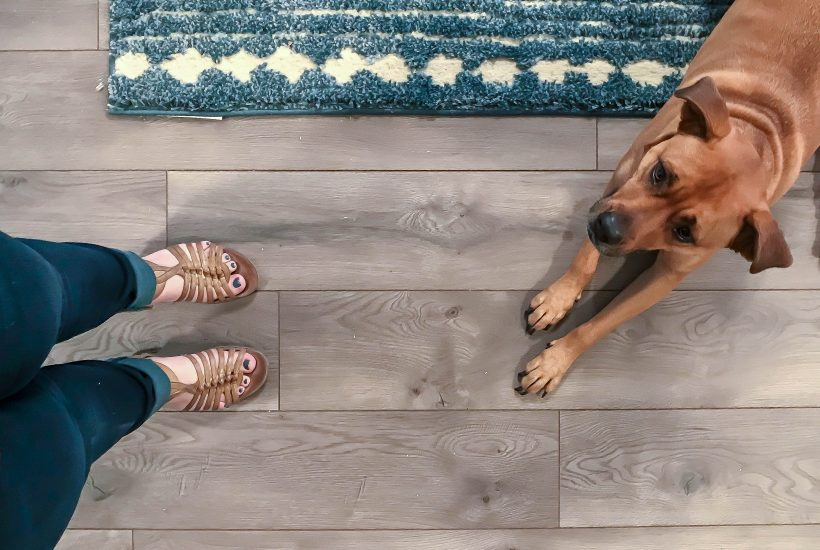 select-surfaces-warm-gray-laminate-flooring-with-dog